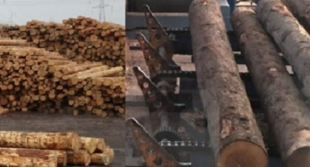 Wood-Lumber Industry BKC